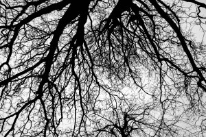 As a side-note, I was hit by a violent attack of hiccoughs upon entering Lincoln today, and had to rest awhile on a bench under a tree. This was the view as I looked up to the Heavens. February 11, 2015
