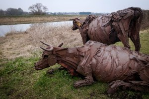 Cattle overlooking the River Witham (really, there was nothing more interesting today). February 12, 2015